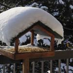 Egy csipetnyi boldogság: a téli madáretetés