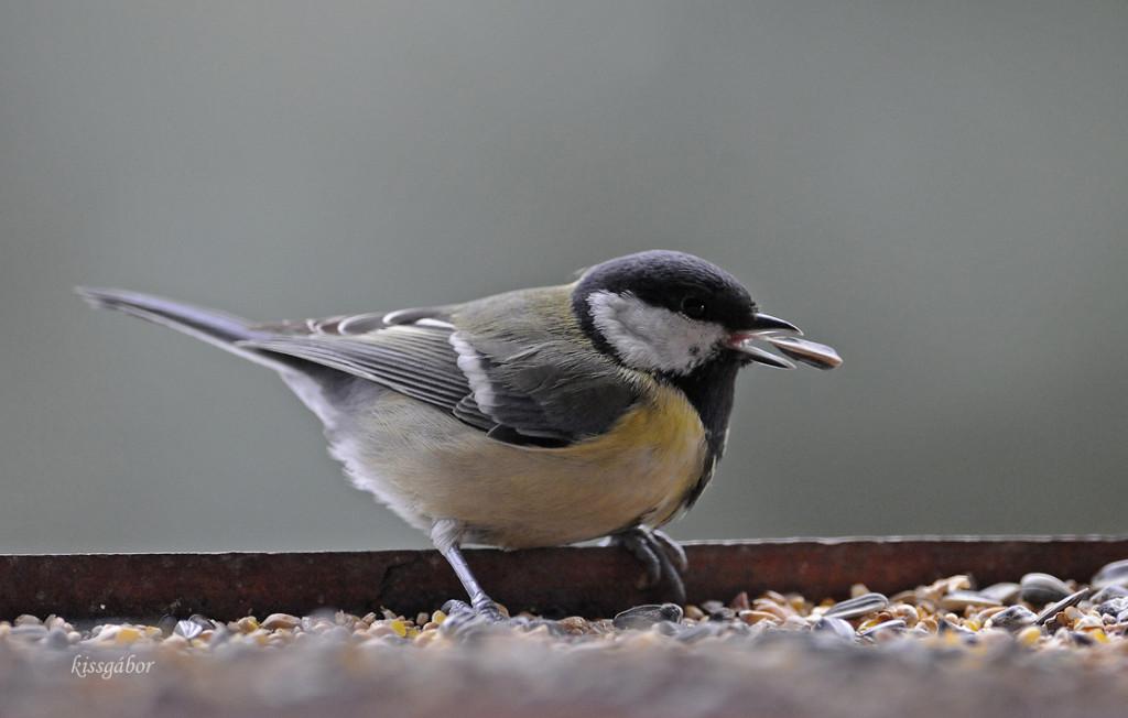 Cinke a madáretetőben