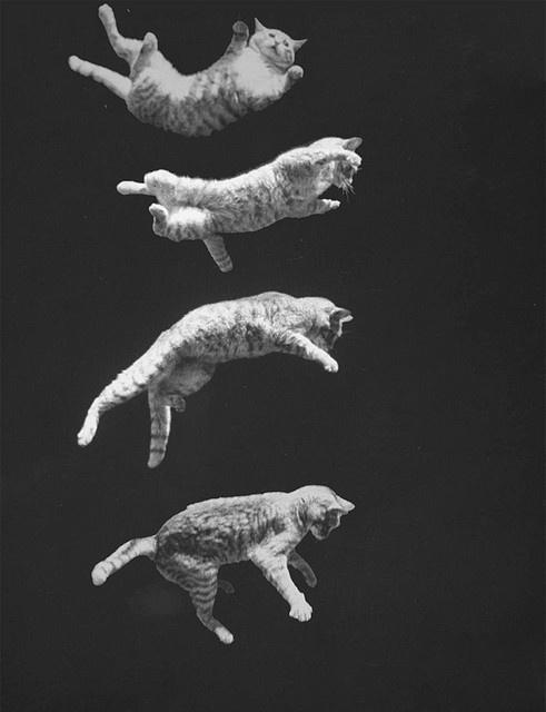 talpára eső macska