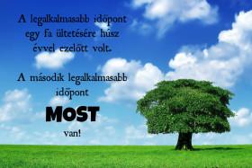 A legalkalmasabb időpont egy fa ültetésére