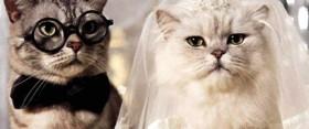 5 esküvői videó, mely tuti jókedvre derít!