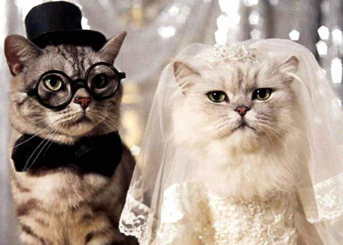 cicaesküvő