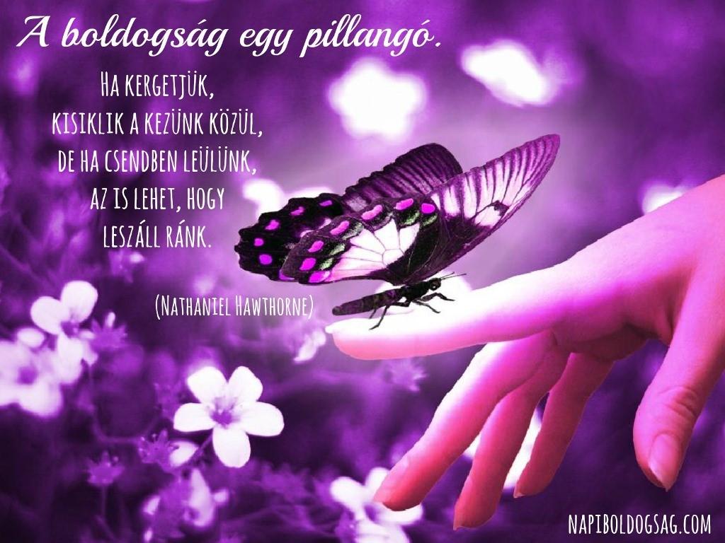 Pillangó idézet