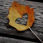 Őszi örömök #3: Gyűjts őszi leveleket!