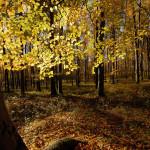 Őszi örömök #1: Fedezd fel a természet szépségeit!