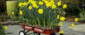 Tavaszi virágot mindenkinek! – A kreatív konténeres ültetésről