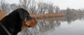 Így sétál egy boldog kutya (és gazdi)
