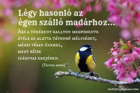 Légy hasonló az égen szálló madárhoz…
