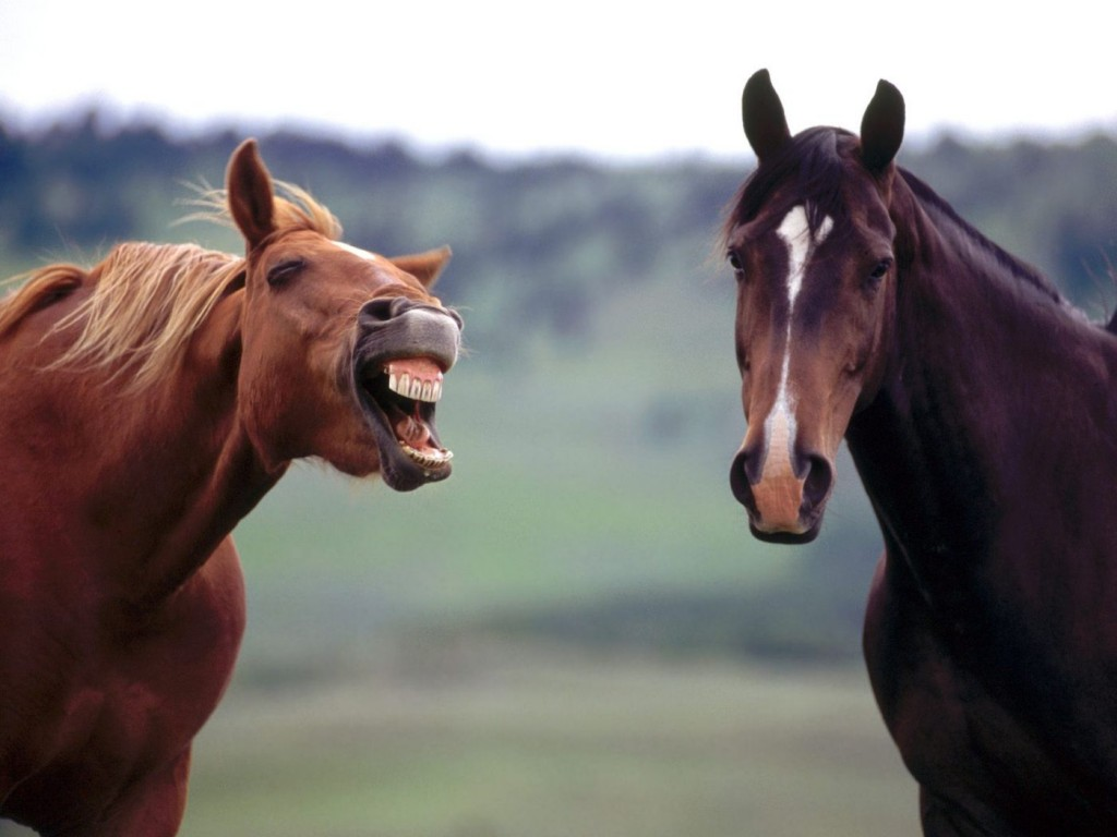 horse_laughing_and_showing_teeth_wallpaper_-_1400x1050