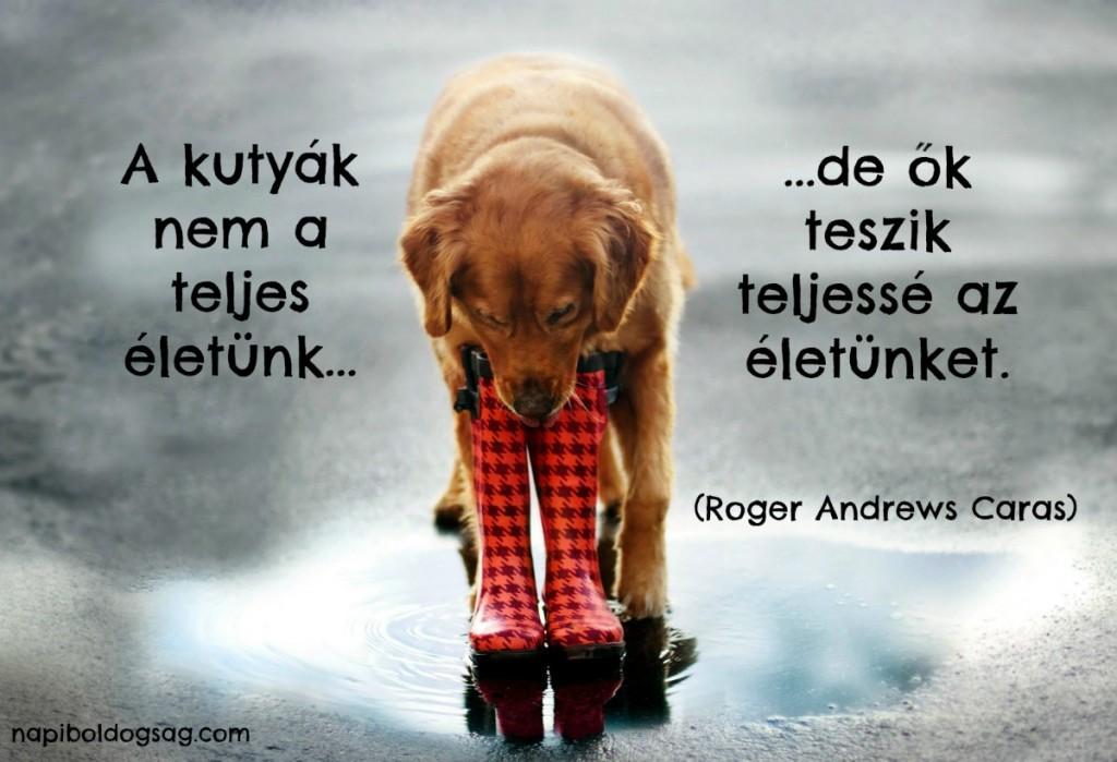 kutyák idézet