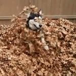 Ez a kutyus tényleg imádja az őszt!