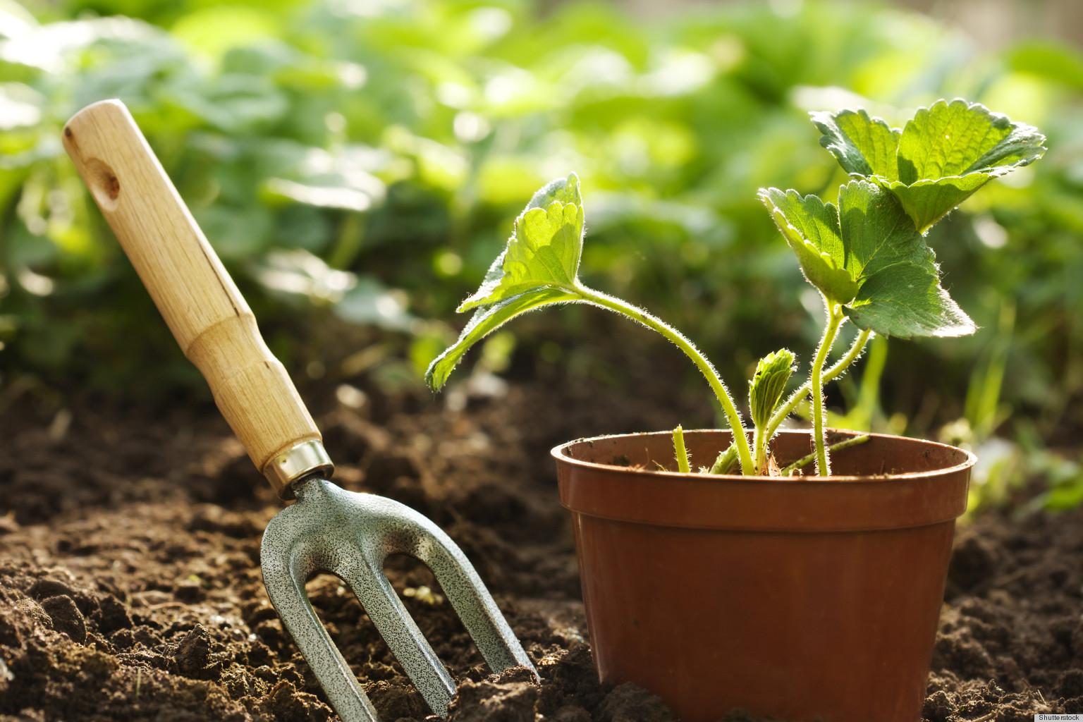 kertészkedés2
