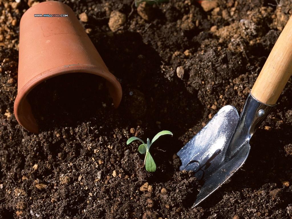 kertészkedés5