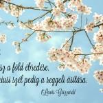A tavasz…