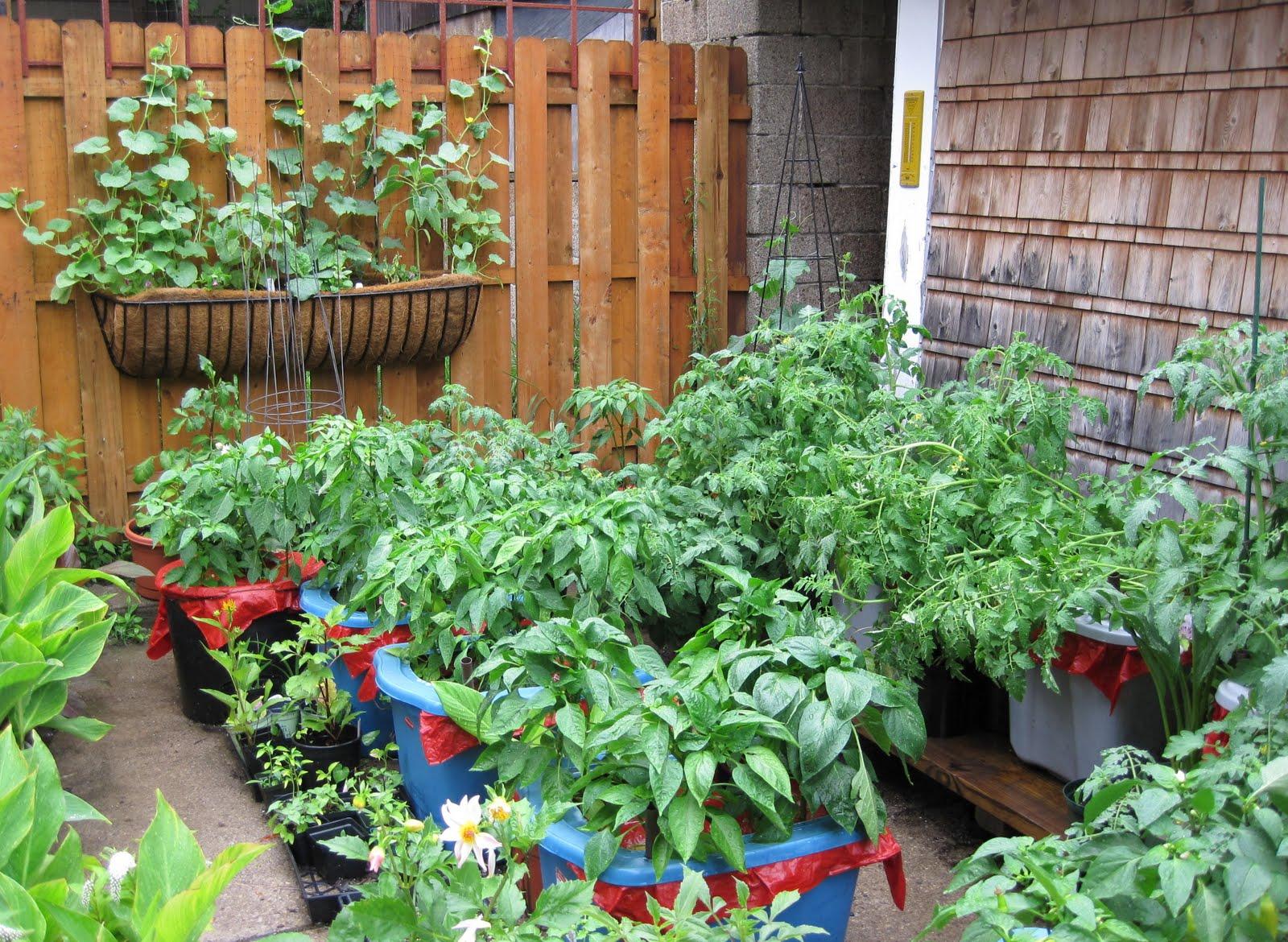 konténeres kert