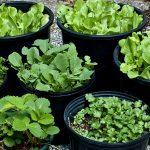 Így termelj magadnak zöldséget kert nélkül!
