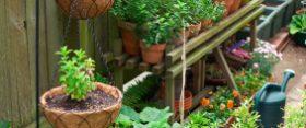 Így termelj magadnak zöldséget kert nélkül! – 2. rész