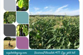 VasárnaPillanatok #177: Egy zöld hét